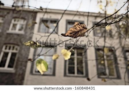 Autumn leaves against Dutch architecture - stock photo