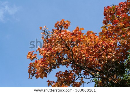 Autumn leaves against the blue sky.
