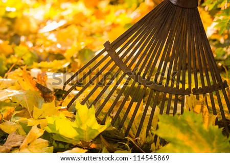 Autumn leaves and a rake on back-light, horizon format - stock photo