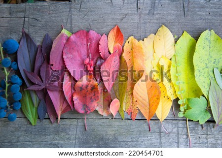 Autumn leaves and berries, Autumn background, Colors of Fall - stock photo