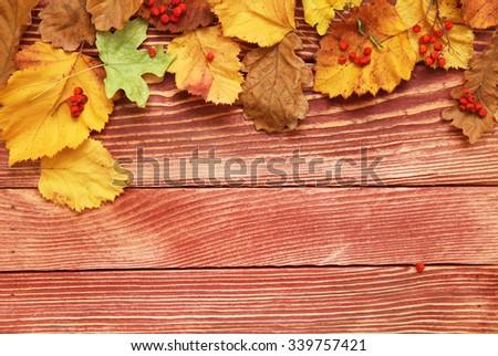 Autumn leaves and berry over wooden background  - stock photo