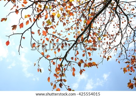Autumn leaves and blue sky - stock photo