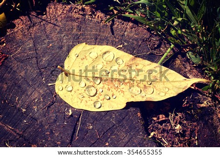 Autumn leaves and dew on a natural wooden background  - stock photo