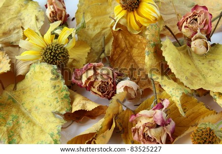 Autumn leaves, and flowers suitable for background