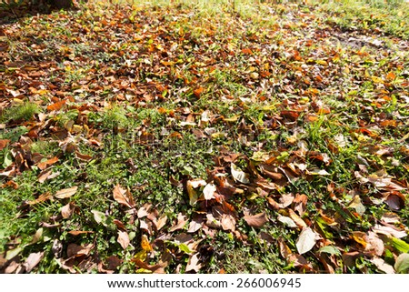 Autumn leaves and grass on the ground - stock photo