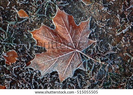 Autumn leaves and grass with hoarfrost frosty sunny morning as a background.