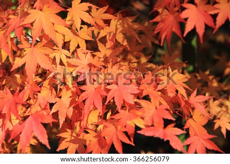 autumn leaves as nice natural color background - stock photo