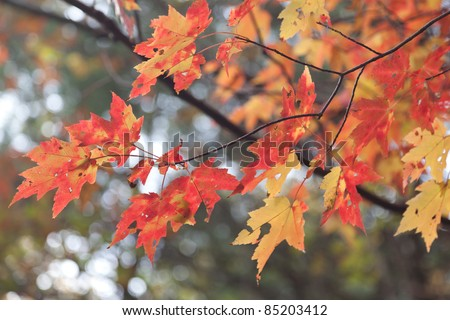 Autumn Leaves at Maltby lake Connecticut - stock photo