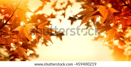 Autumn leaves (autumn foliage) lit by sunlight - sun rays