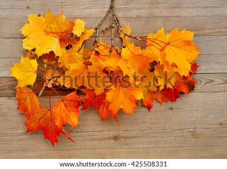 Autumn leaves. Autumn leaves on wood background. Color Autumn leaves. Autumn leaves on wood. Autumn leaves background. - stock photo