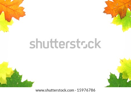 Autumn leaves background. Can be used for the advertisements