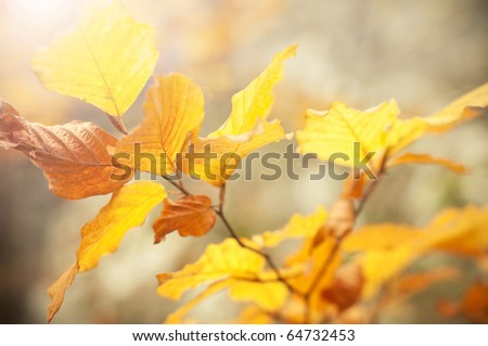 autumn leaves background in a sunny day