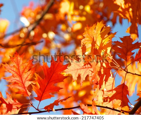 autumn leaves background in sunny day - stock photo