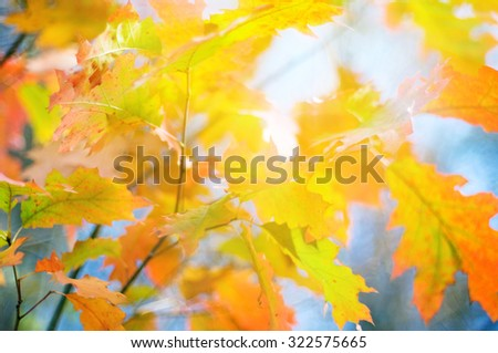 autumn leaves background,  soft focus  - stock photo