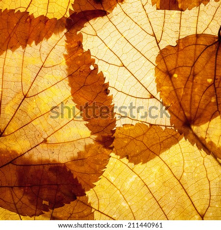 autumn leaves background texture abstract - stock photo