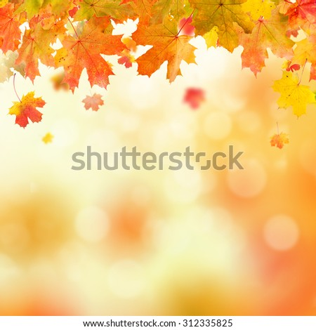 autumn leaves background with copyspace for text