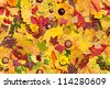 Autumn leaves, berries and flowers; seamless background - stock photo