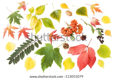 Autumn leaves, berries and nuts set isolated on white background - stock photo