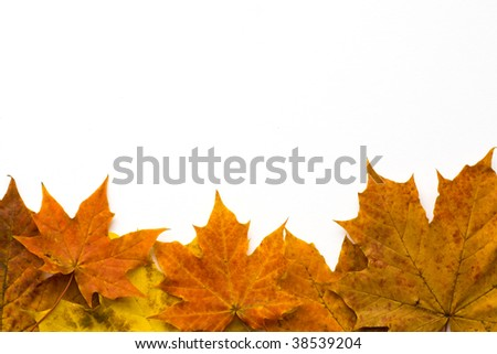 autumn leaves border against a white background