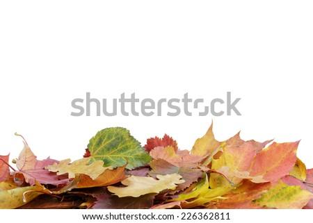 autumn leaves border, isolated on white background - stock photo