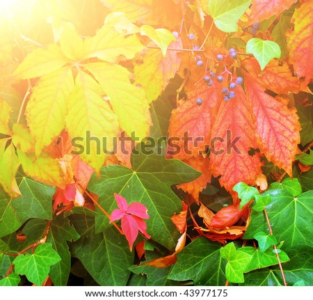 autumn leaves, branches and berries
