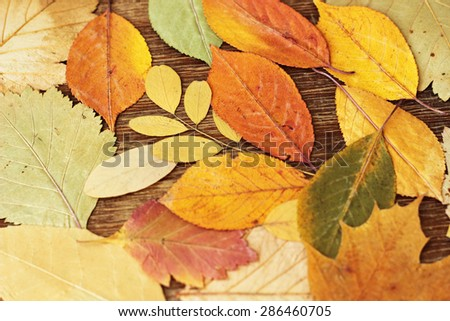 autumn leaves, closeup, vintage background  - stock photo