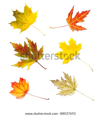 Autumn leaves collection isolated on white background - stock photo