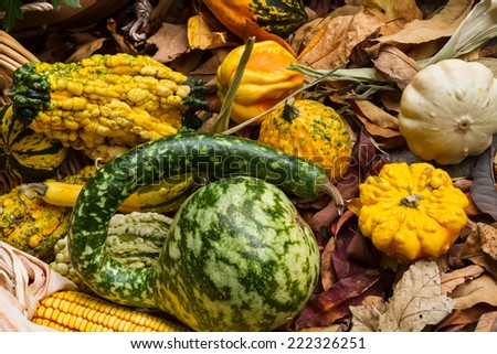 Autumn leaves, corn and gourds on the ground