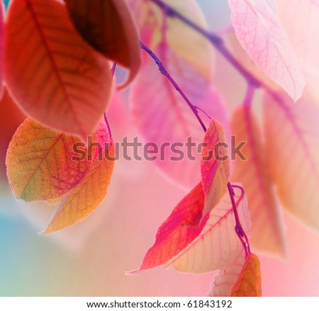Autumn Leaves design - stock photo