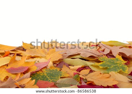 Autumn leaves different colors. - stock photo