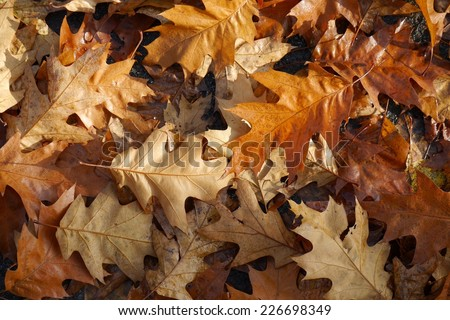 Autumn leaves, Fall background, seasonal picture - stock photo