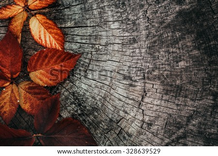 Autumn leaves. Fall red leaves on tree bark. Nature background - stock photo