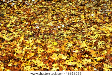 Autumn leaves falling