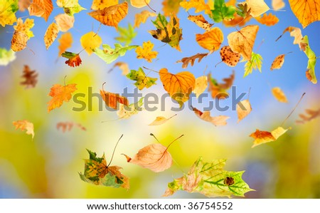 Autumn leaves falling and spinning against the blue sky - stock photo