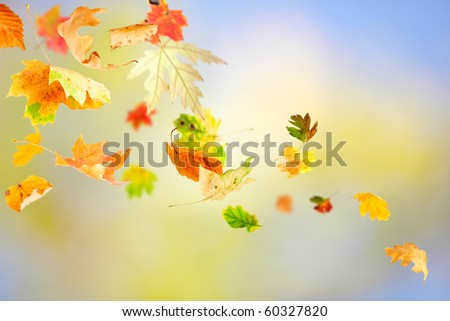 Autumn leaves falling and spinning on natural background - stock photo