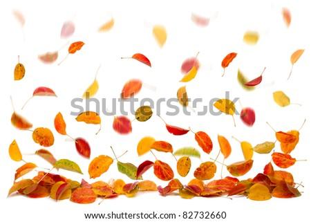 Autumn leaves falling down(selective focus, motion blur). - stock photo