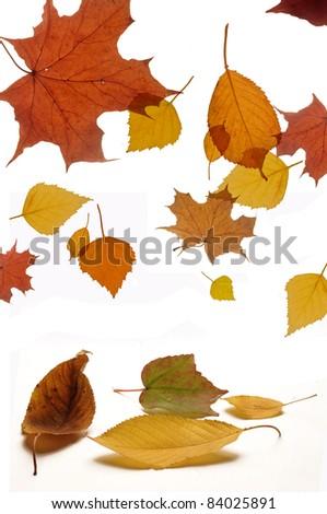 Autumn leaves falling isolated on white - stock photo
