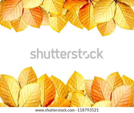 autumn leaves frame ,celebration card - stock photo
