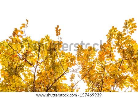 autumn leaves frame on white background - stock photo