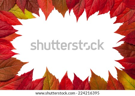 Autumn leaves frame on white background. Virginia creeper leaves. Top view - stock photo