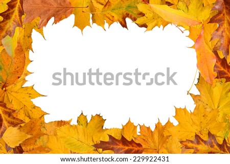 autumn leaves frame with clipping path