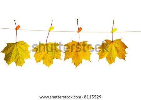Autumn leaves hanging on a clothesline - stock photo