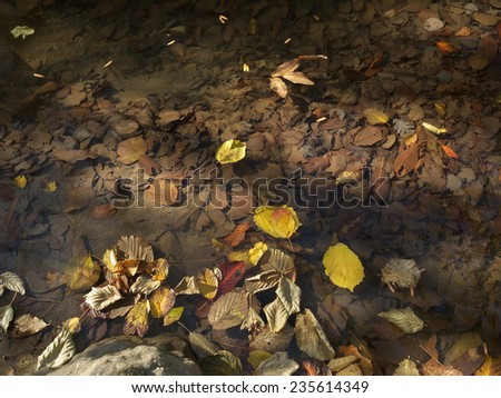 autumn leaves illuminated by the sun on a clear water creek  - stock photo