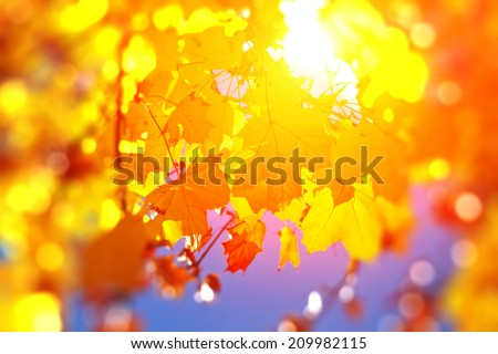 Autumn leaves in bright sunlight - abstract photo focus on center - stock photo