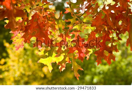 Autumn leaves in fall - stock photo