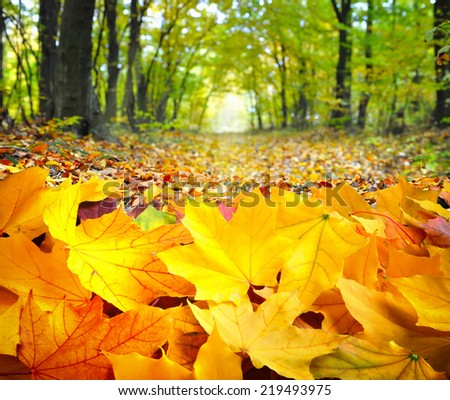 Autumn leaves in forest - stock photo