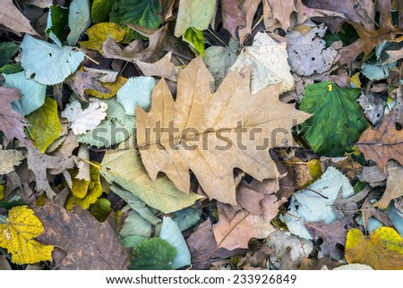 autumn leaves in forest in Central Park New York City - stock photo