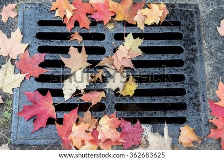 Autumn leaves in park on ground around grading manhole - stock photo