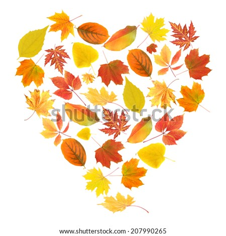 Autumn leaves in shape of heart isolated on white