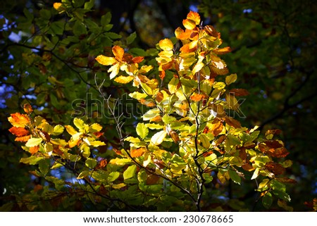 Autumn leaves in sunny day - stock photo